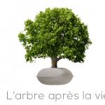 PDJ : 30 Octobre – Coffin, l'arbre après la vie