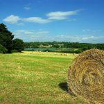 Le crowdfunding en milieu rural : paradoxe ou réalité ?