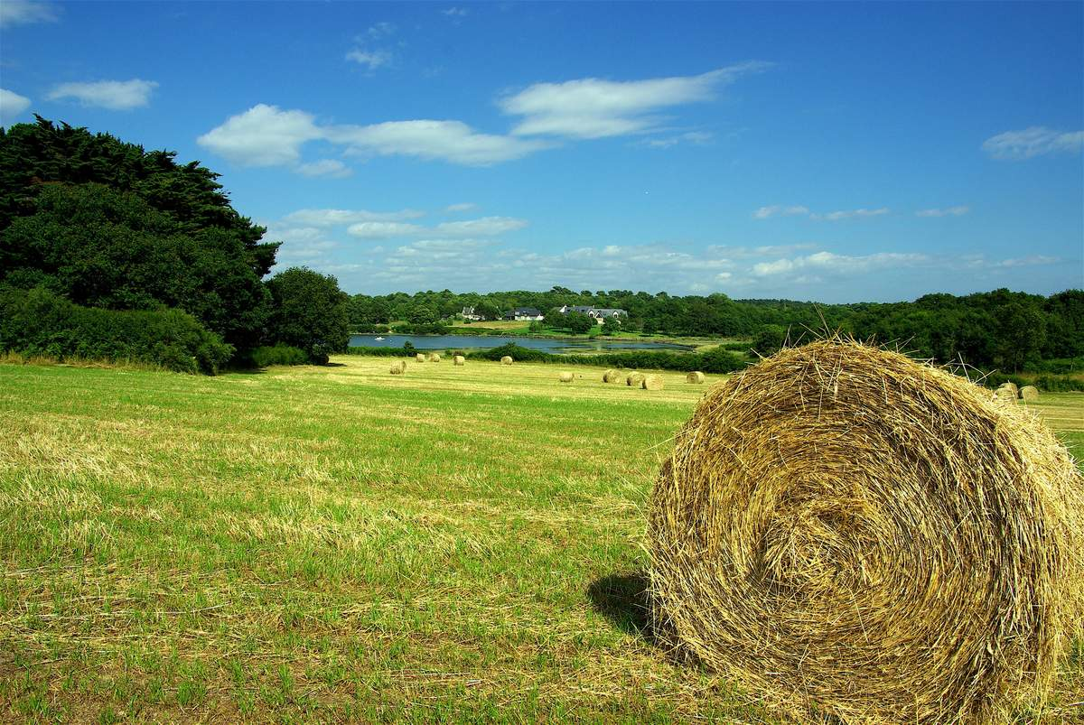 Le crowdfunding en milieu rural paradoxe ou r alit for En milieu rural
