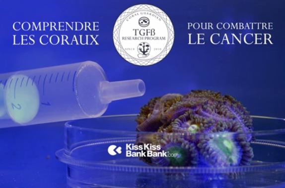 Augmenter nos connaissances sur les causes du blanchiment des coraux crowdfunding via kisskissbankbank