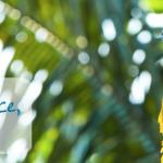 [ECOLOGIE] Participez à la préservation d'une réserve tropicale au Nicaragua