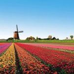 [EUROPE] Le crowdfunding se porte bien aux Pays-Bas !