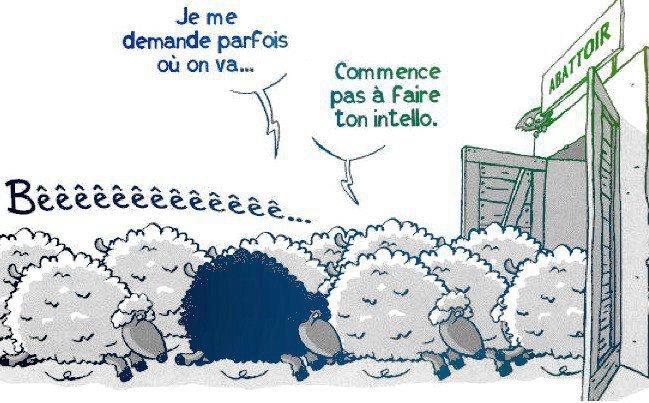 http://www.goodmorningcrowdfunding.com/wp-content/uploads/2015/02/mouton-noir-intello-abattoir.jpg