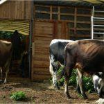 PDJ 4 Août : La ferme Meuh doit se re-construire !