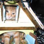[TOP] Les meilleurs projets en crowdfunding pour chats