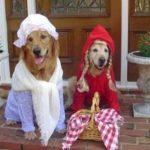 La Bizarrerie du 29 Octobre : Une armure pour chien