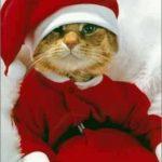 La Bizarrerie du 14 octobre : Recevoir des textos du Père Noël, ça vous tente ?
