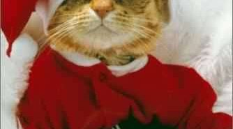 Pere noel chat