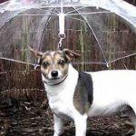 La Bizarrerie du 24 Novembre : Le parapluie incassable