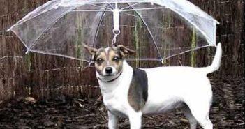 Parapluie-chien-insolite