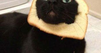 cat-toast