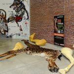 [SUIVI] La girafe Twiga fait peau neuve devant son public
