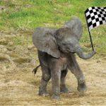 [ANIMAUX] Le zoo de Beauval compte sur vous pour agrandir la famille de Rungwe