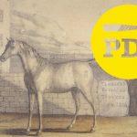 PDJ 6 juin : Vizir, restauration du dernier cheval de l'Empereur Napoléon Bonaparte