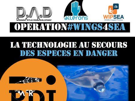 PDJ 17 juin : Opération #Wings4Sea, sauvons le Diable de mer méditérranéen