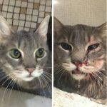 [SOLIDARITÉ]Internet se mobilise pour sauver un chat maltraité