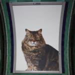 68 chats s'invitent dans le métro Londonien au nom du crowdfunding