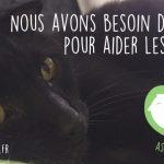 PDJ 31 janvier : Ronron Association, le bar à chats
