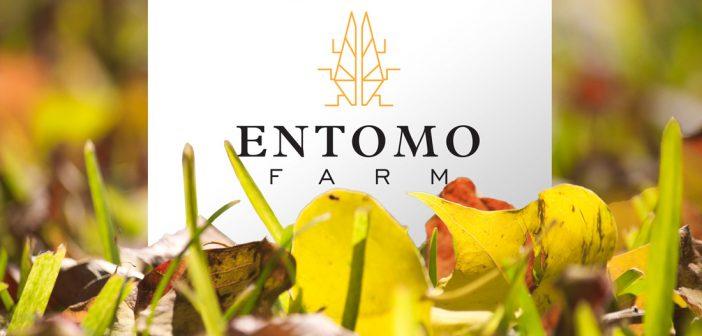 [SUIVI] Entomo Farm vers une nouvelle levée de fonds