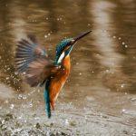 PDJ 7 juillet : La biodiversité – N'attend que votre soutien